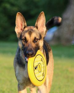 "close up frisbee photo used for page ""Senior Pets"""