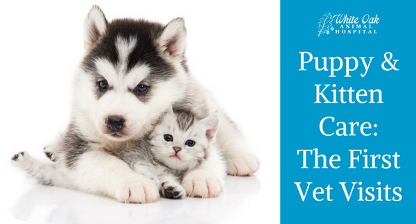 "photo used for blog post ""Should My Puppy/Kitten Go To the Vet for Vaccines"""
