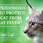 "Image for Cytauxzoonosis: How to Protect Your Cat From ""Bobcat Fever"""