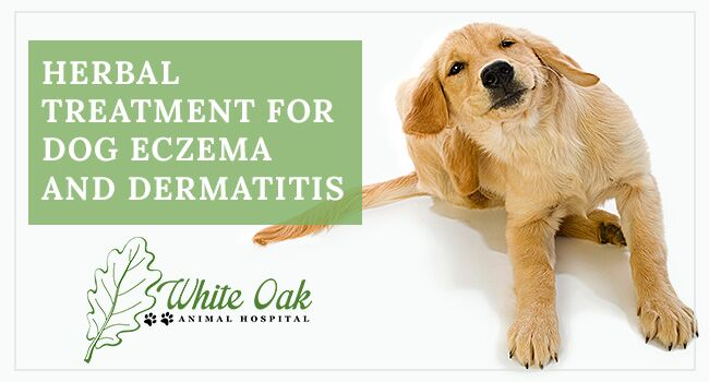 Image for Herbal Treatment for Dog Eczema and Dermatitis