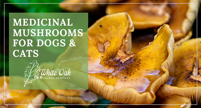 How Medicinal Mushrooms Help Boost Your Pet's Immune System