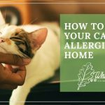 Image for How to Treat Your Cat's Allergies at Home