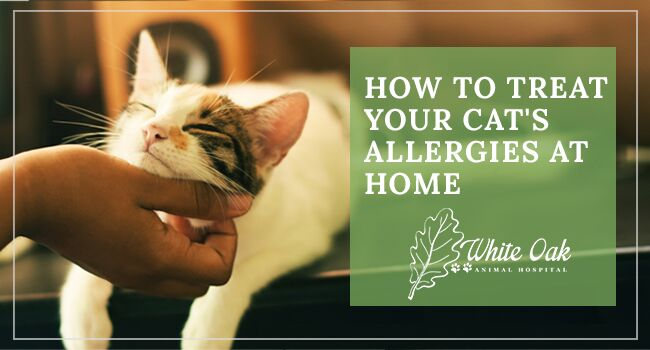How to Treat Your Cat's Allergies at Home