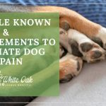 image for: 3 Little Known Herbs and Supplements to Alleviate Dog Joint Pain
