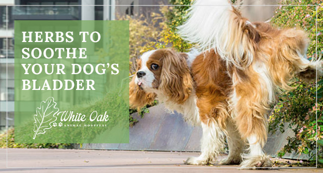 image for: Best Herbs That Soothe The Bladder For Dogs