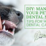 Image for Managing Pet Dental Needs at Home