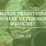 Image for What Is Traditional Chinese Veterinary Medicine (TCVM)?