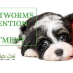 Image for What You Should Know About Heartworm Disease