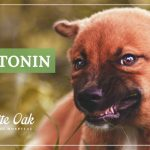 image for: How Melatonin for Dogs Promotes Relaxation