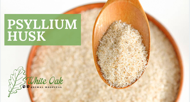 image for: How Psyllium Husk Powder Prevents Hairballs In Cats