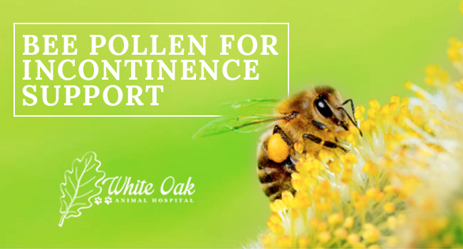 image for: Why Bee Pollen Dietary Supplement Helps Dog Incontinence