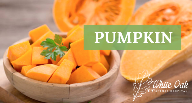 Image for Why Pumpkin Extract Supplement Helps Prevent Scooting