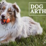 image for: Top Dog Arthritis Natural Remedy Options