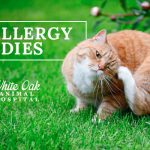 image for: Most Effective Cat Allergy Remedies