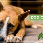image for: How To Identify And Treat Dog Cancer