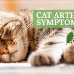 Everything You Need To Know About Cat Arthritis Symptoms