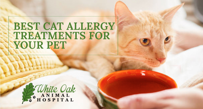 image for: Best Cat Allergy Treatments For Your Pet