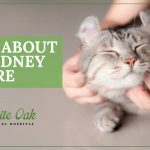image for: Facts About Cat Kidney Failure