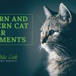 image for: Eastern and Western Cat Cancer Treatments