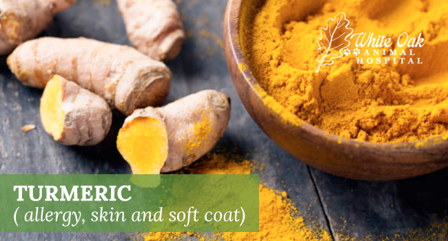 image for Benefits Of Turmeric For Dogs Skin And Coat
