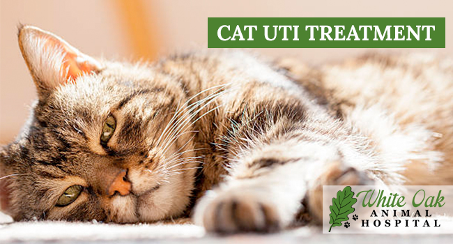 image for: How to Treat A Cat UTI At Home