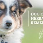 image for: Top Dog Cancer Natural Remedies