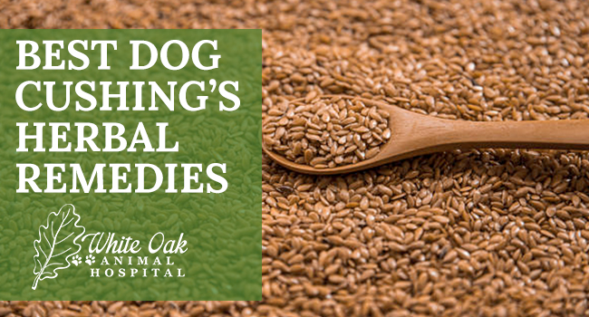 image for: Best Dog Cushing's Herbal Remedies