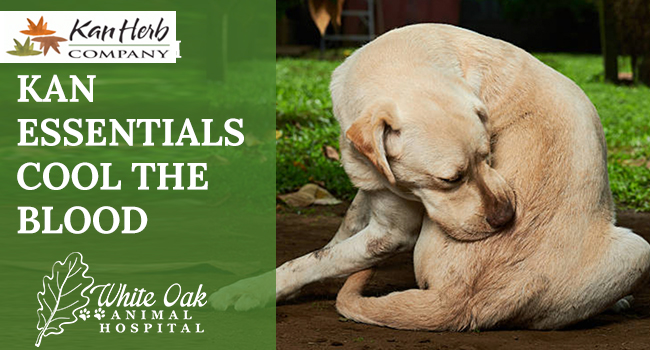 image for: How To Alleviate Dog Itching With Kan Essentials Cool The Blood