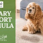 image for: Boost Dog Bladder Health With Urinary Support Formula
