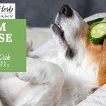 image for: Calm A Dog Down Naturally With Kan Essentials Calm Repose