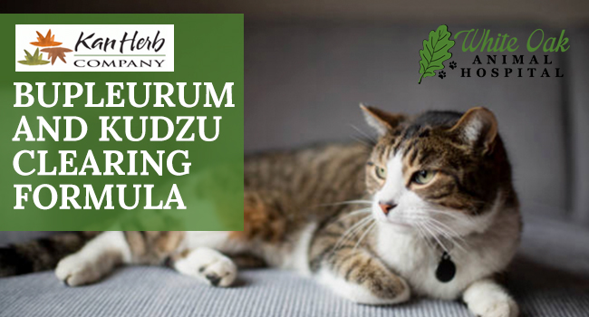 image for: Give Your Pet Natural Herbs For Cat Nervous System Problems