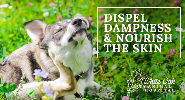 image for: How Dispel Dampness And Nourish The Skin Alleviates Dog Itching